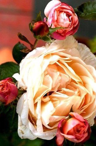 Видеоурок: пишем маслом реалистичные цветы