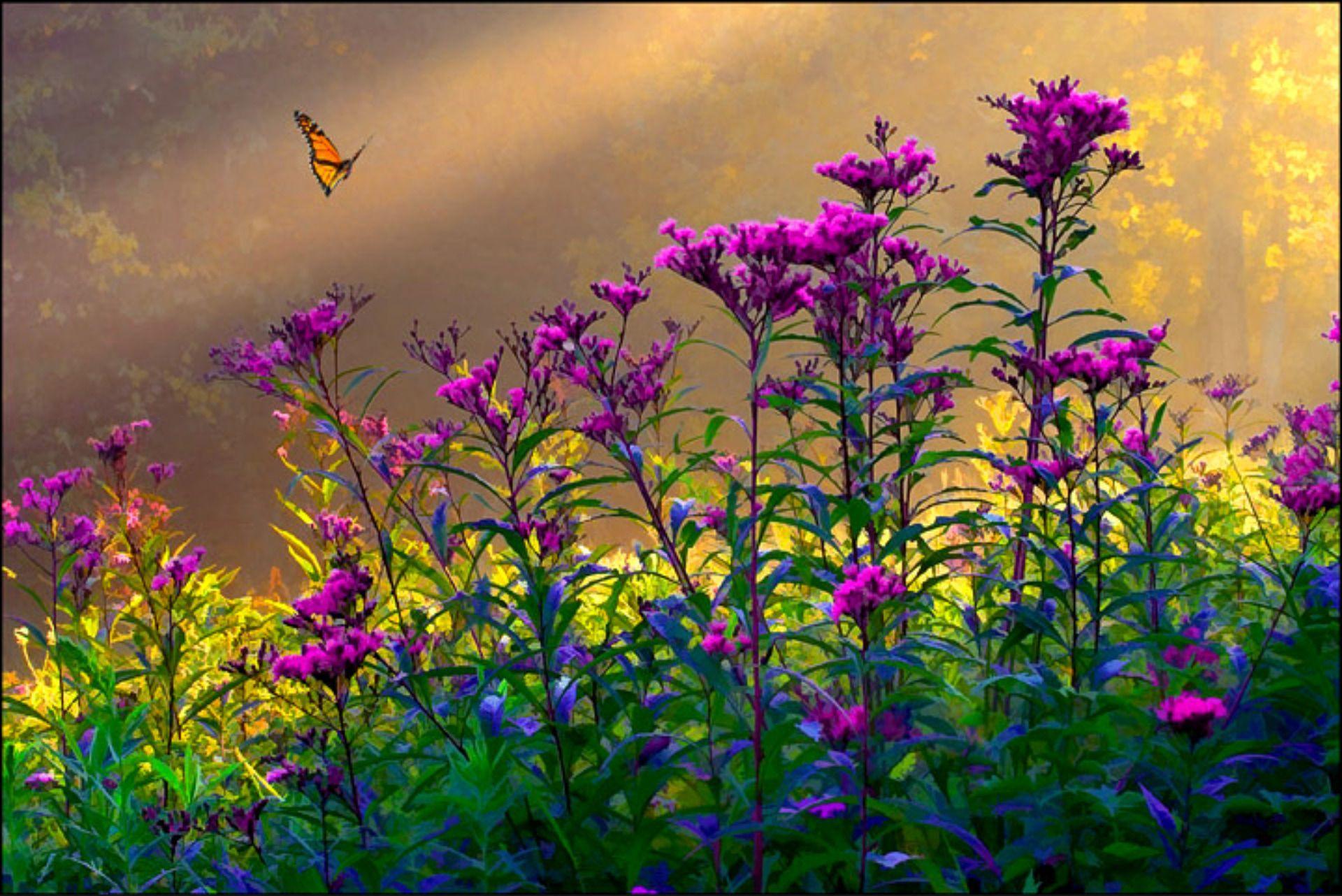ВИДЕО: Рисуем красивые полевые цветы маслом